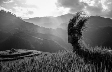 Black And White Landscape Rolling Mountains And Rice