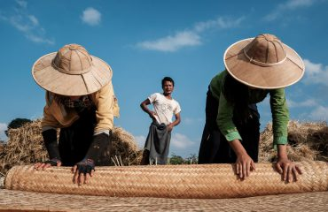 Rolling Bamboo Mats During Harvest