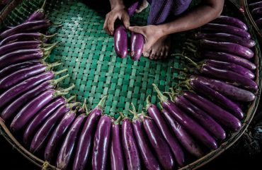 Arranging Aubergine (Eggplant) For Sale