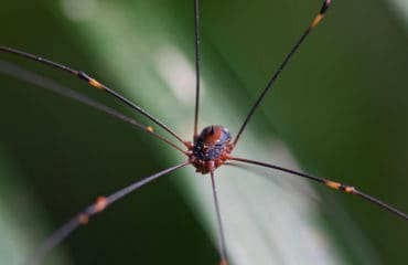 Spider of Vietnam