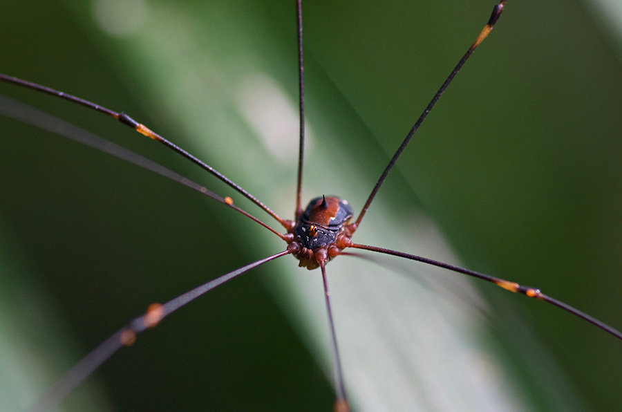 A spider captured during a wildlife photography workshop with hoi an photo tour
